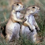 Squirrel Couple
