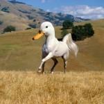 DuckHorse?