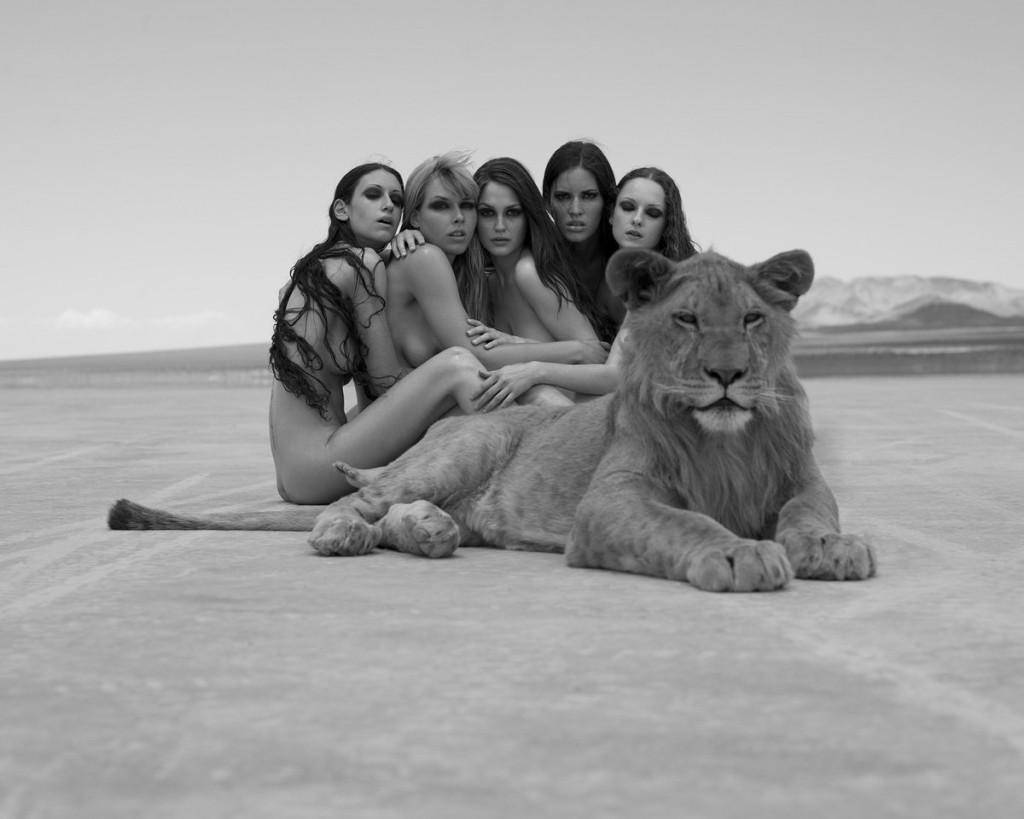 lion pimp