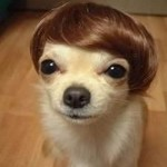 Little Dog with Human Hair
