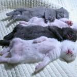 4 Little Kittens